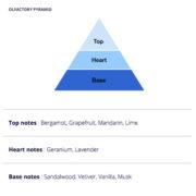 Chess Sport Olfactory Pyramid
