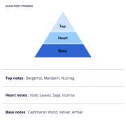 Diplomate Homme Olfactory Pyramid