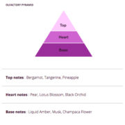 Elegance Olfactory Pyramid