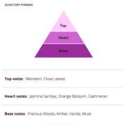 Parnasse Olfactory Pyramid