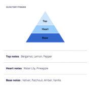 Thallium-Olfactory-Pyramid